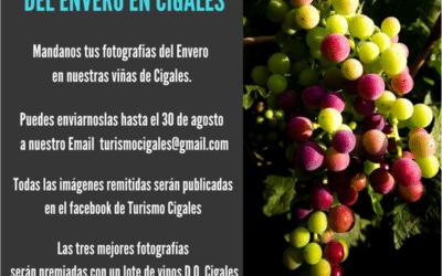 I Concurso fotográfico del Envero en Cigales