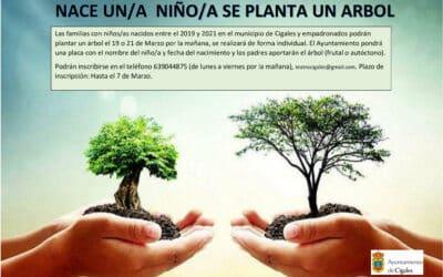 Nace un niñ@ se planta un árbol en Cigales