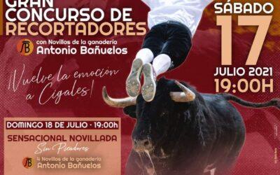 Concurso de Cortes y Novillada en Cigales